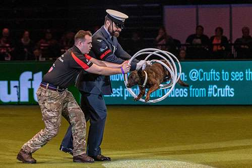 RAF Police dog through the hoops