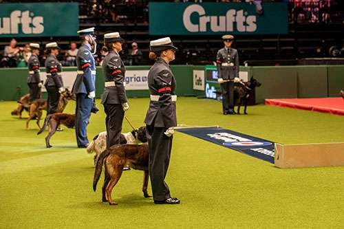 RAF Police Dog Display Team lined up at Crufts