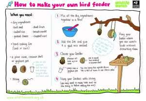 Downloadable poster showing how to make your own bird feeder by the Wildlife Trust