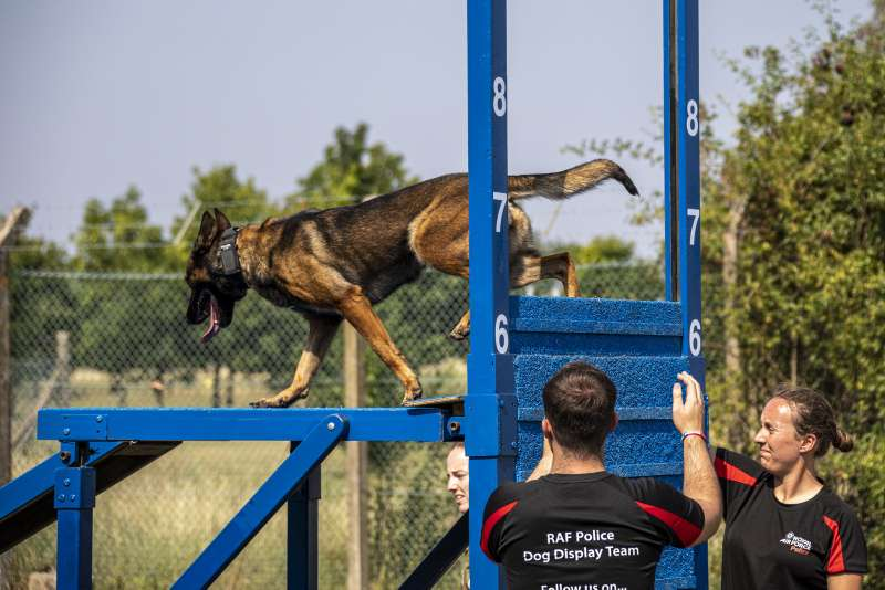 Military Working Dog Reja and his handler Cpl Cooper from RAF Conningsby, practice a show trial routine.