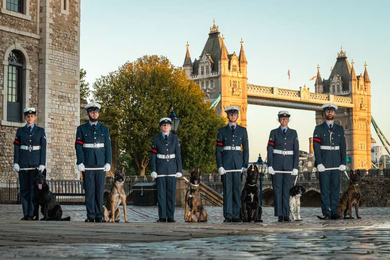 On Thurs 20th August 2020, the Royal Air Force Police Military Working Dog Display Team took part in a promotional photo shoot at the Tower of London.